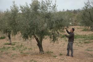 olivera-i-jordi