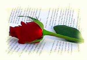 rosa-i-llibreedited